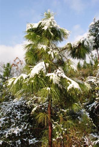 校园雪景三