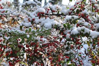 校园雪景二